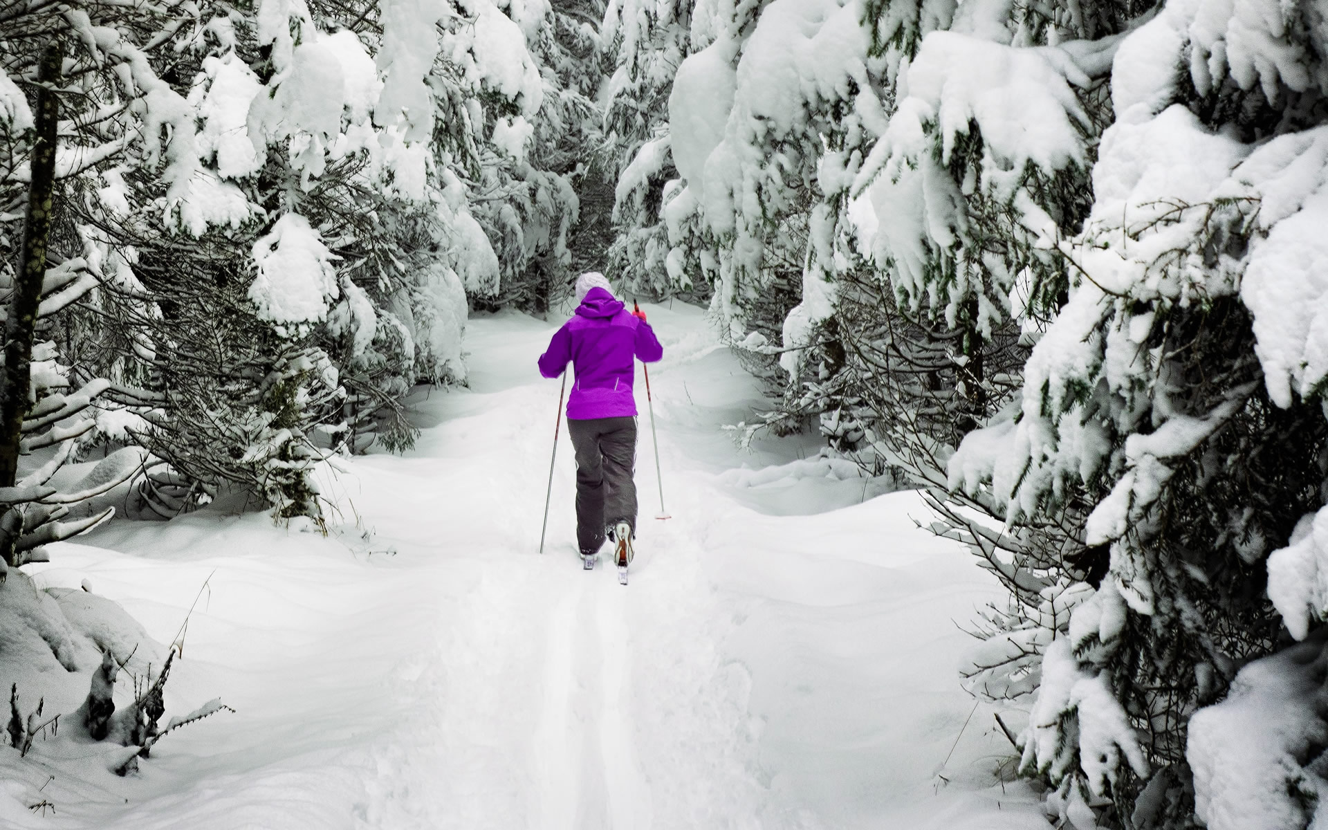 cross-country-skiing-purple-jacket